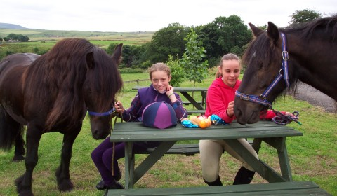 Things to do horse riding peersclough picnic rides